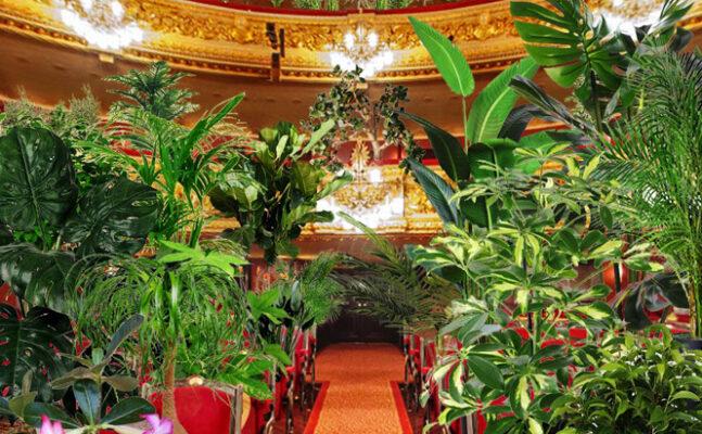 Operahus spiller koncert for planter | Magasinet KLASSISK
